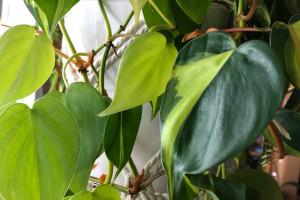 Die Liebe zu Pflanzen