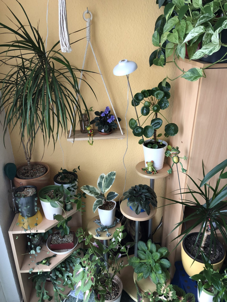 Pflanzen in meiner Ecke